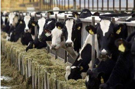 Photo of قطب الحليب بالمغرب.. إنتاج 2،5 مليار لتر