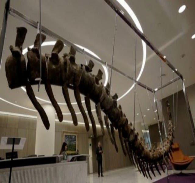 Photo of بيع ذيل ديناصور عثر عليه في المغرب بالمكسيك