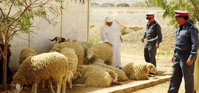 "Photo of ""لفراقشية"" ينفدون غزواتهم ضد رؤوس الماشية بسوس"