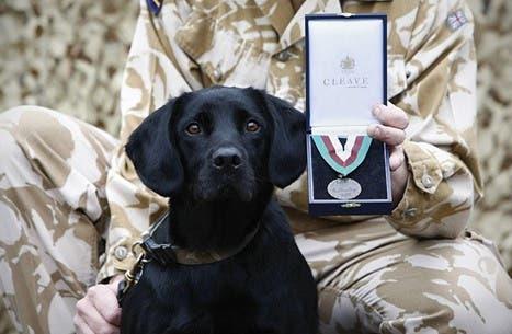 Photo of حفل لتكريم كلاب بريطانيا ومنحها وسام الحيوانات الأبطال