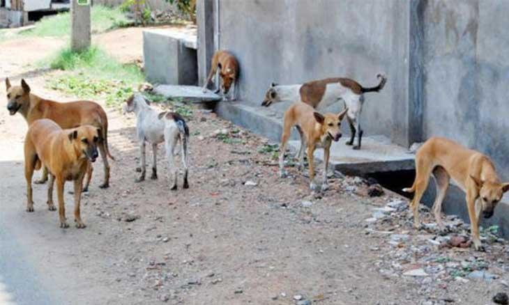 Photo of مصر تبدأ خطة تصدير الكلاب والقطط إلى الدول التي تأكلها