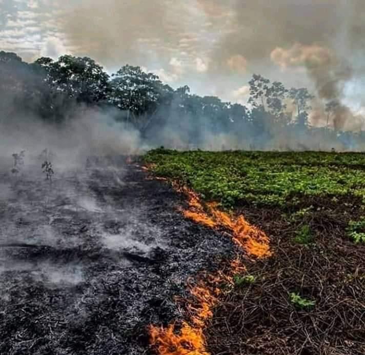 Photo of ميركل: لا يمكن الصمت على حرائق الأمازون