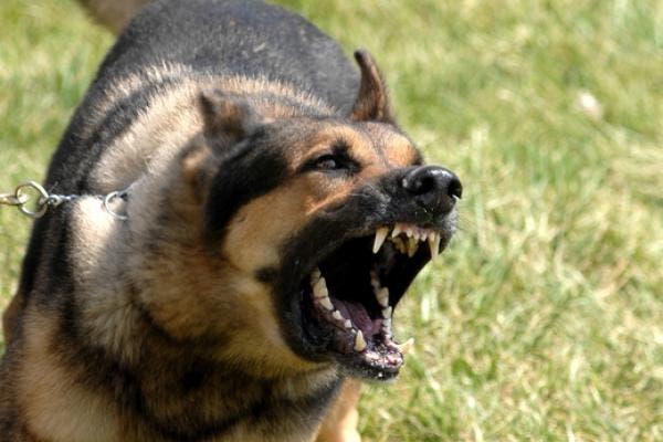"""Photo of استنفار باسبانيا بعد وفاة مغربي بداء """"الكلب"""""""
