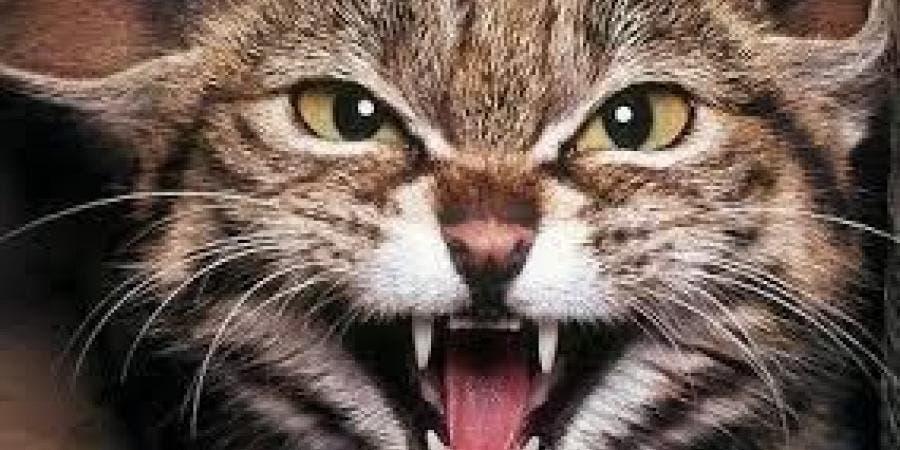 "Photo of ""قطة شريرة"" تحبس امرأة لمدة يومين .. وفرق الإنقاذ تتدخل"