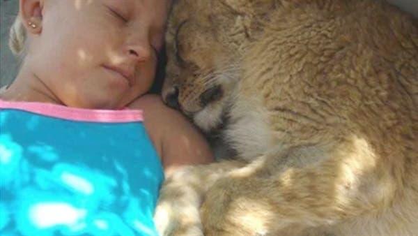 Photo of شاهد فتاة ولدت بين الحيوانات المفترسة فاصبحت لاتستغني عنهم