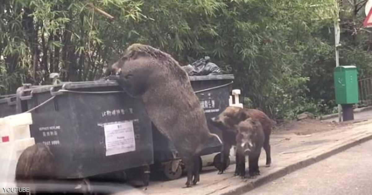 "Photo of فيديو ""وحش القمامة"" يصدم الآلاف"