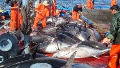Photo of وزارة الصيد البحري : نشاط الصيد مستمر وتعزيز منتظر للعرض خلال الفترة المقبلة