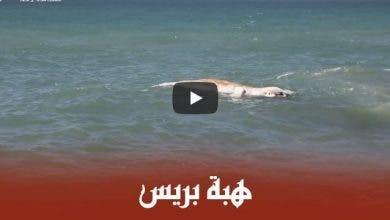 Photo of سواحل الهرهورة تلفظ حوتا بطول ستة أمتار
