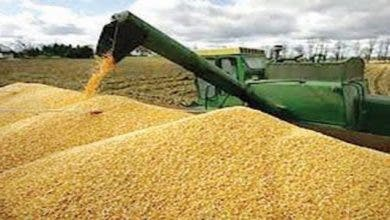 Photo of اخنوش : إنتاج الحبوب بلغ لحد الآن خمسة ملايين و700 ألف قنطار