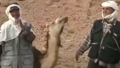 Photo of الرشيدية : رحل يستغيثون لإنقاذ الإبل من مرض يهددهم (فيديو)