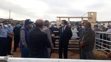 Photo of في زمن كورونا .. فتح  أول سوق نموذجي للمواشي بأزرو على الصعيد الوطني