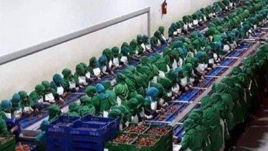 """Photo of البؤر الصناعية : حينما يتغلب الهاجس الاقتصادي """"التايلوريزم"""" على صحة المغاربة"""