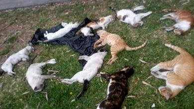 "Photo of نُشطاء يدينون ""مجزرة"" اعدام حيوانات أليفة بتطوان"