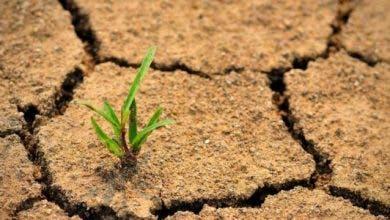 Photo of ندوة رقمية دولية من أجل الاحتفال باليوم العالمي لمكافحة التصحر والجفاف