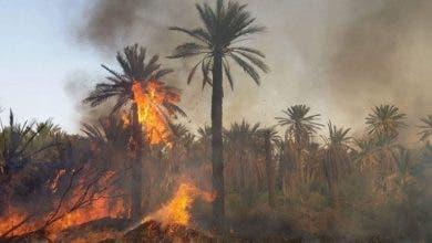 Photo of تزنيت .. السيطرة على حريق أتى على واحة شاسعة في ظرف وجيز