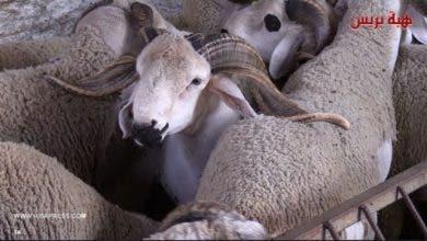 Photo of الكسابة يطمئنون المغاربة.. هاد العام السوق طايح وهذا ثمن آغلى حولي