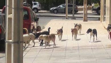 Photo of ظاهرة انتشار الكلاب الضالة تغزو شوارع مدينة خريبكة