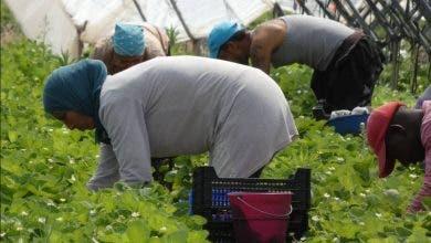 """Photo of إطلاق برنامج إعادة 7100 من عاملات """"الفرولة"""" المغربيات باسبانيا"""