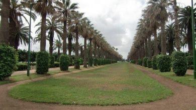 Photo of أرقام كورونا المرتفعة تدفع سلطات البيضاء لإغلاق الغابات والفضاءات الخضراء