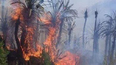 Photo of تزنيت.. إخماد حريق في واحة آيت منصور قرب مدينة تافراوت