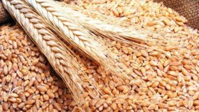 Photo of ارتفاع واردات الحبوب بنسبة 51% متم غشت المنصرم