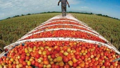 Photo of ارتفاع قيمة صادرات المنتجات الغذائية الفلاحية سنة 2019