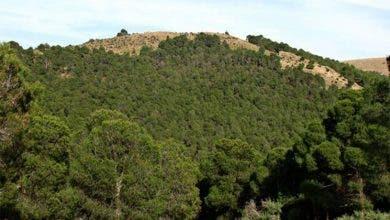 """Photo of عرض استراتيجية """"غابات المغرب 2020-2030 """" على الفاو"""
